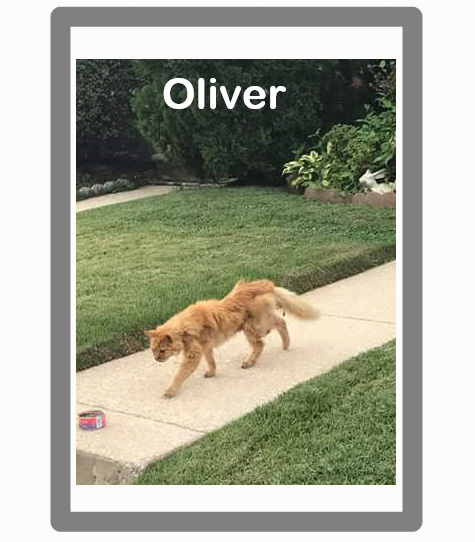 Oliver a cat unnecessarily euthanized at a vets