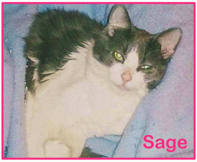 Should the investigators disclose the name of the suspect in the Sage the Cat torture and killing?