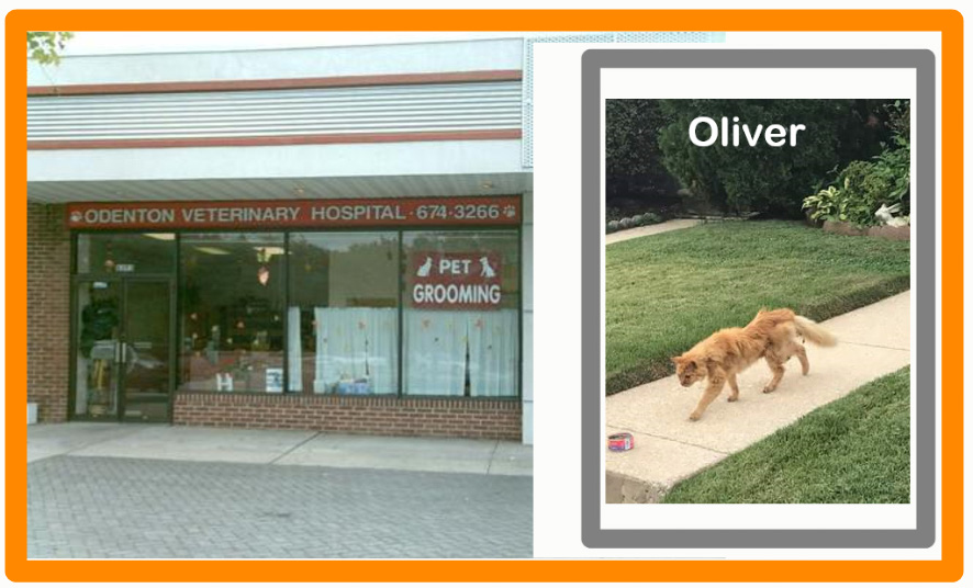 Odenton animal hospital and Oliver the cat euthanized or killed unnecessarily?