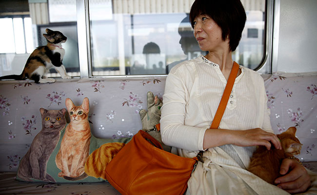 30 free-roaming cats on a train in Japan