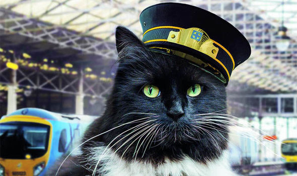 Felix - Huddersfield's railway station cat