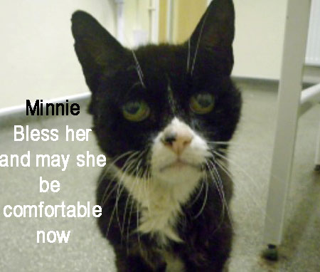 Minnie and elderly cat maltreated and dumped
