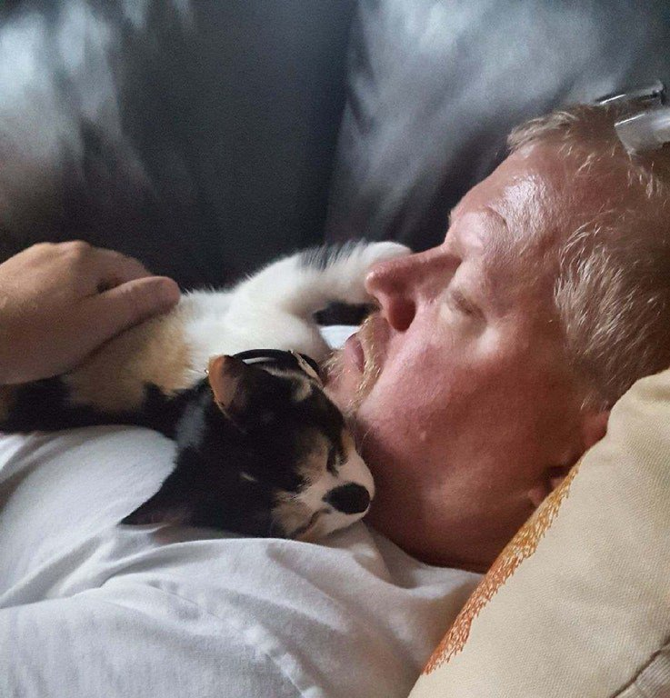 Tiny rescue kitten bewitches man who did not want her