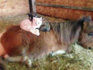What makes a good barn cat?