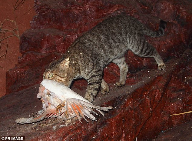 Australian local council give bounty to feral cat shooters