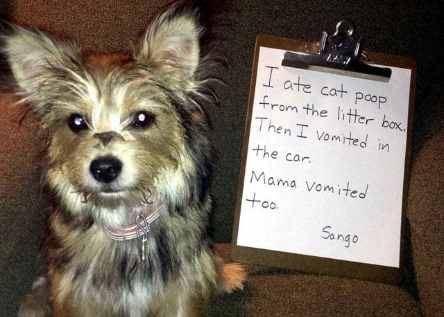 Dog eats cat poop