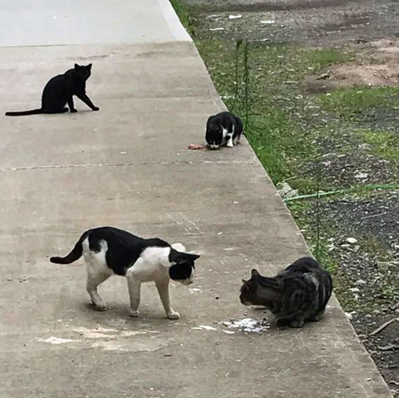 Feral cats at Industry City
