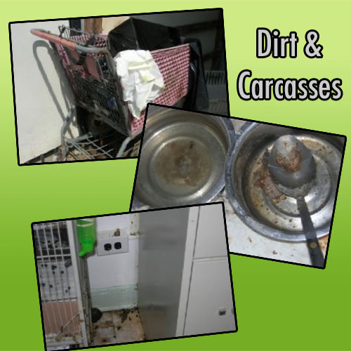 AHS animal shelter - dirt and carcasses