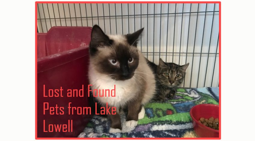 Lost and found pets from Lake Lowell