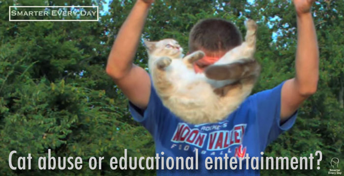 Cat abuse or educational entertainment?