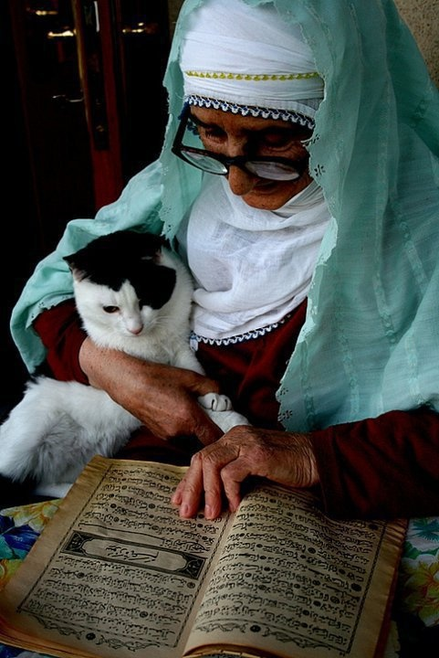 Cat and muslim