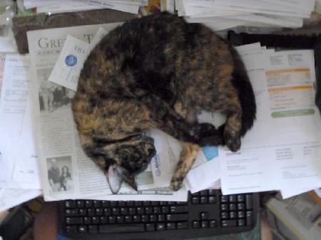 Cat sleeping on paper