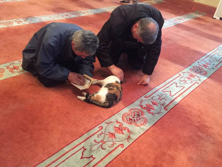 Muslims with cat at mosque
