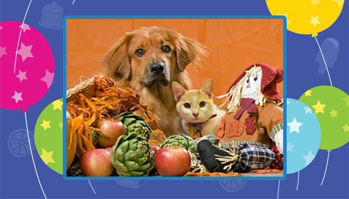 Thanksgiving for cats and dogs