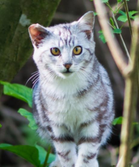 tinykittens feral cat
