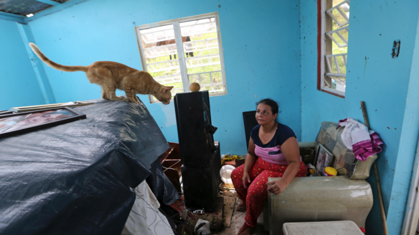 Cats in the aftermath of hurricane maria on puerto rico