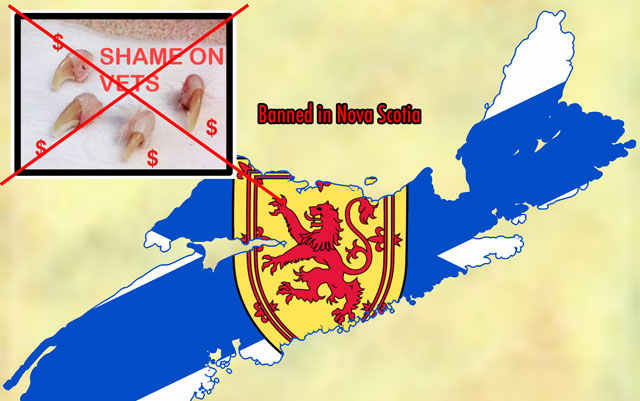 Declawing banned in Nova Scotia