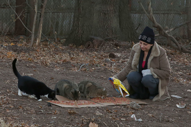 Feral cat colony protected by the authorities
