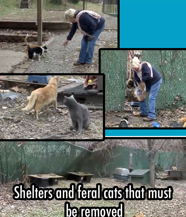 Feral cats and their shelters must be removed by Christmas Day