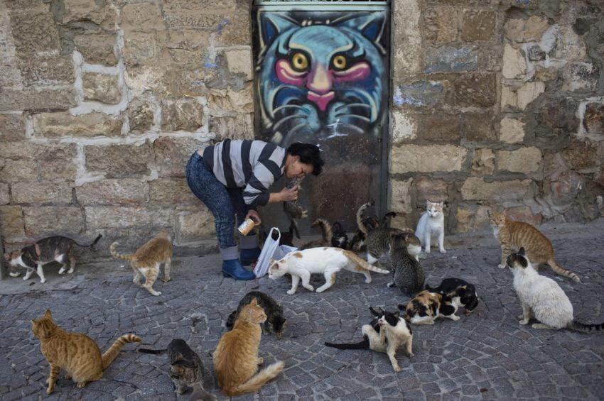 A woman feeds community cats in Jerusalem, Israel. Photo: EPA/ABIR SULTAN
