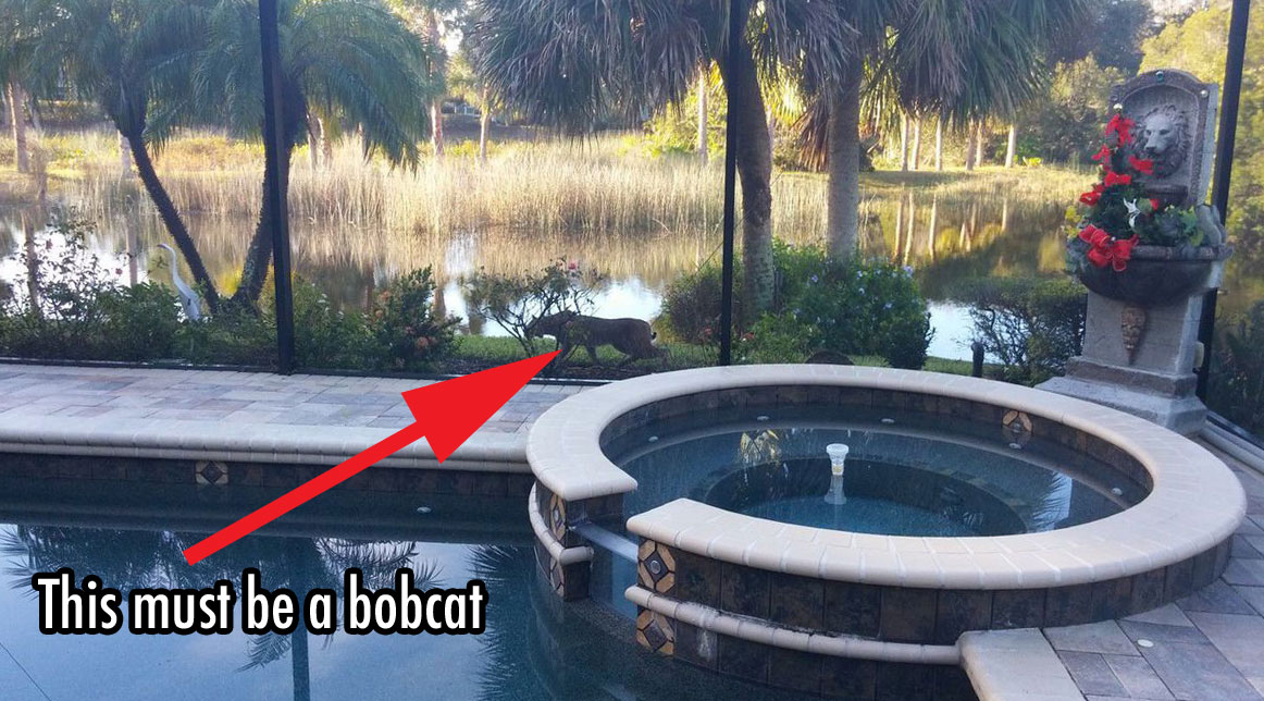 Mystery cat in Florida