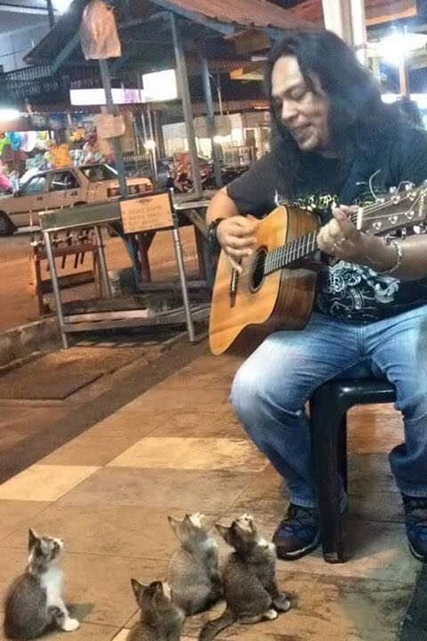 Burly guitarist plays for clowder of street kittens in Malaysia