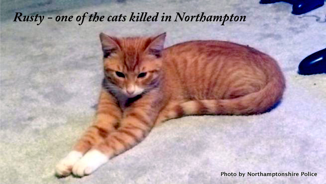 Rusty one of the cats killed in Northampton