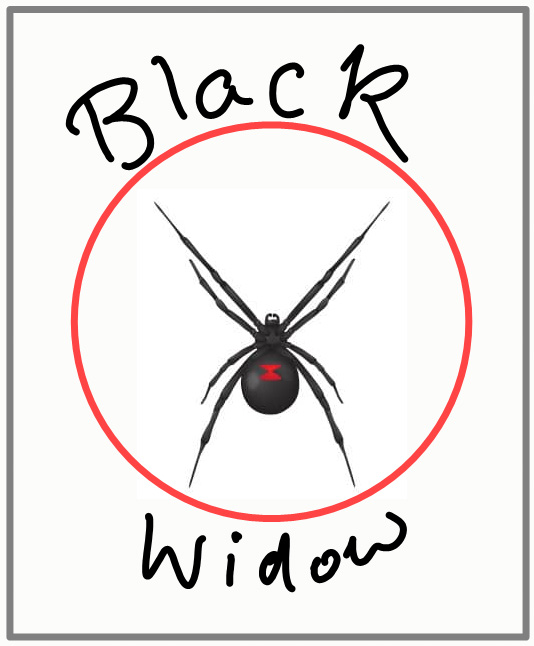 Black widow spiders can kill cats