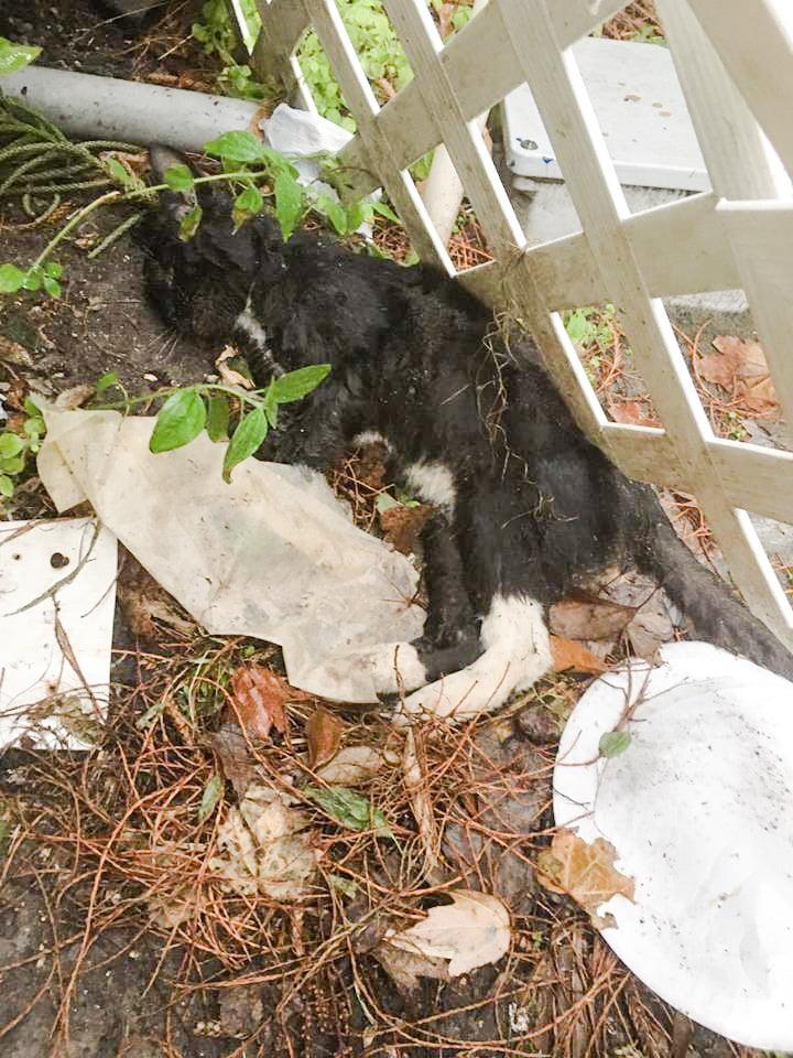 Feral Cat Rescue Orlando