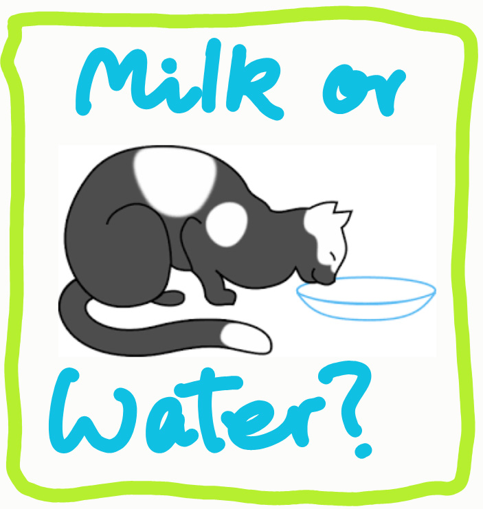Milk or water for your cat?