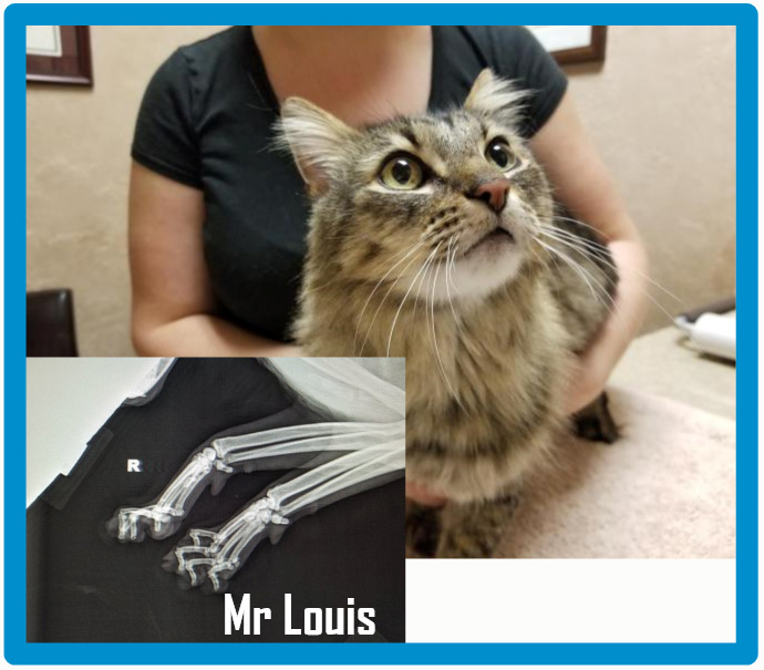 Mr Louis is suffering the long term consequences of declawing