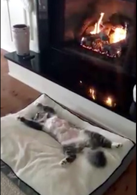 The contented Cat Video