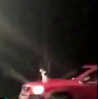 Cat riding on car hood while cat moves