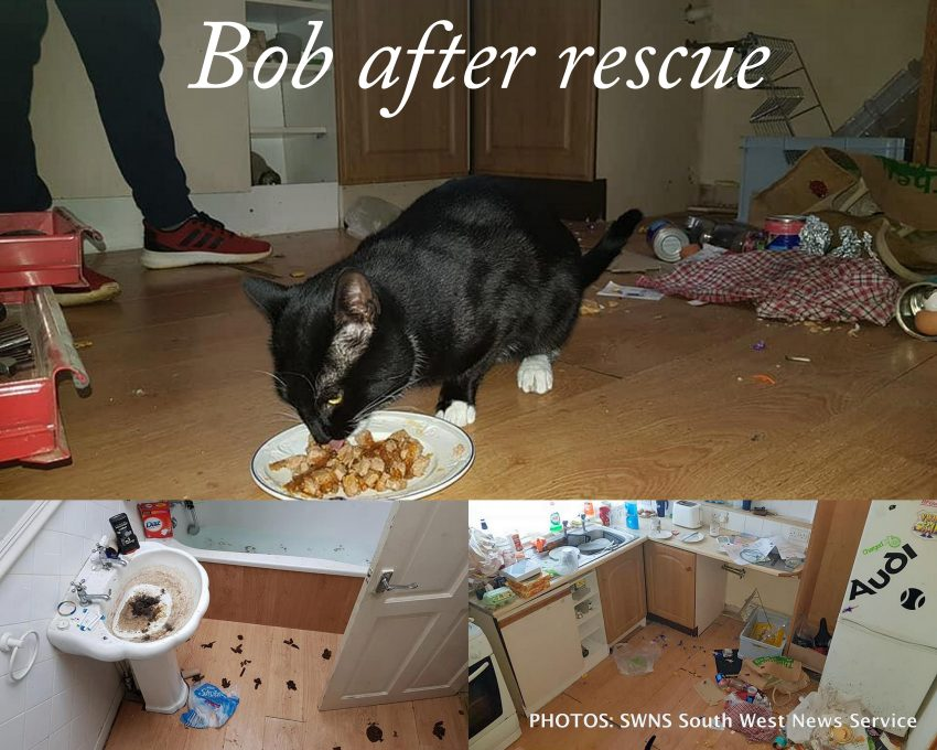 Bob a cat who was 'stolen' by a landlord in order to save him