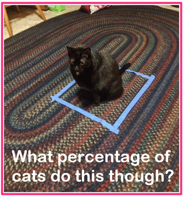 Why Do Cats Like Squares
