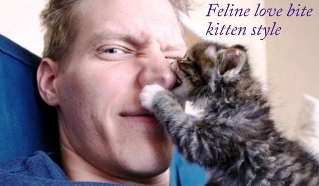 Feline love bite kitten style