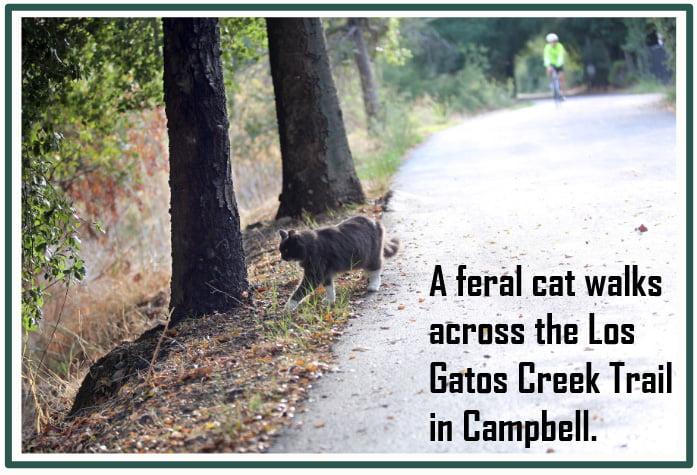 Feral cat colony Los Gatos