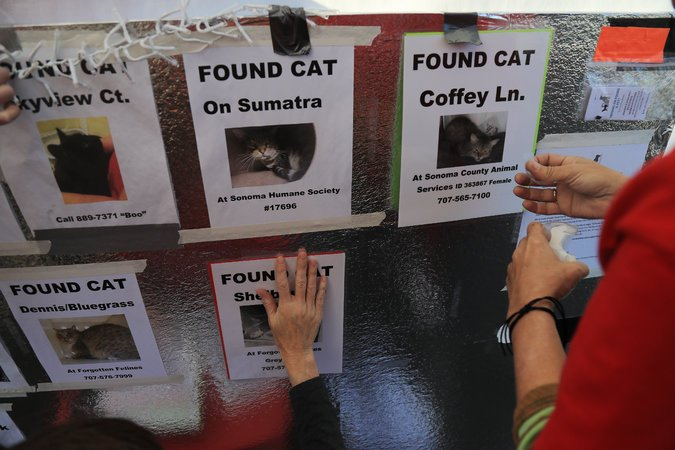 Lost cat posters from california wildfires