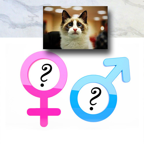 Are Male Cats Better Than Females?