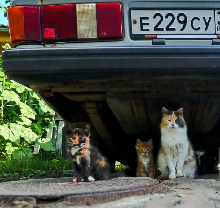 The olympics is a vehicle for killing stray cats and dogs