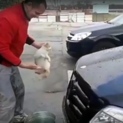 Man uses cat as a car cleaning sponge