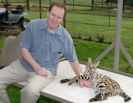 tame and socialised serval cat