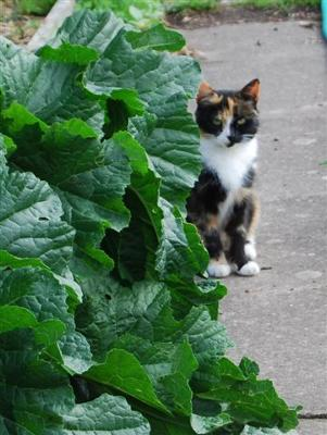 Second cat at the allotments