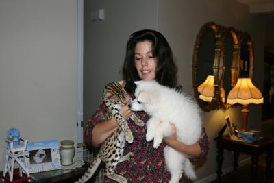 Is bengal cat dangerous