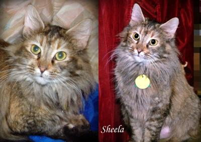 Sheela WAS a stray