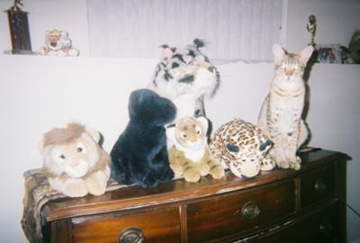 Find the kitty... sorry not a Bengal!