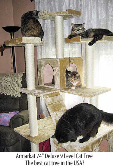 Best cat tree in the USA