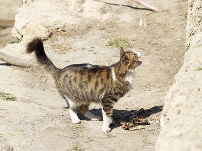 Cyprus Cat - photo by galarapid