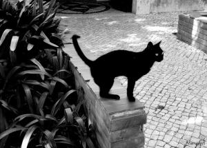 Black cat in Portugal