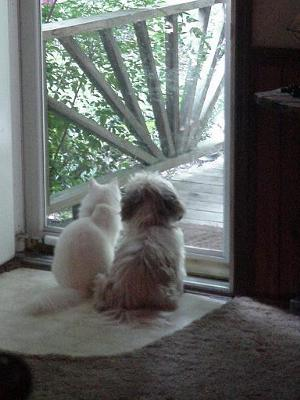 Blanca and Calene the Shih-tzu sharing a moment